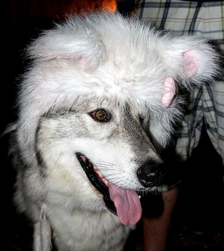 Bandit with Latest Headwear July 2011