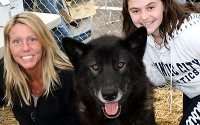 Howling Woods Farm is an Animal Rescue, and Wolfdog education center