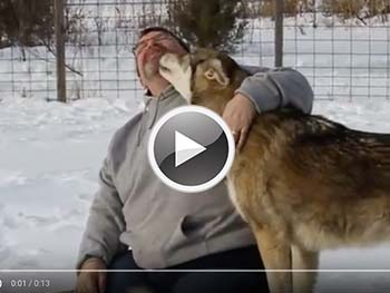 Wolf Dog Animal Rescue and Education Center NJ. Howling Woods Farms