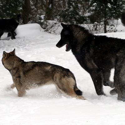 Feb 2009 Snowstorm Samson and Shania