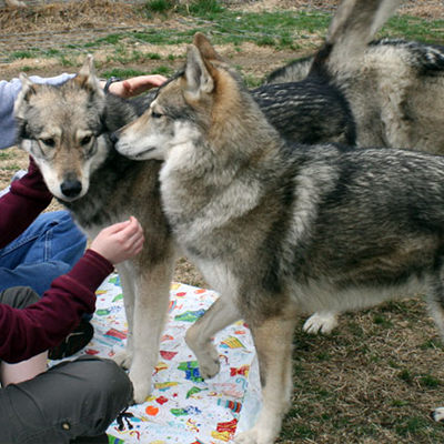 Sierra, Sakari & visitors March 2009