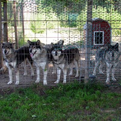 Shania, Shadow, Josee & Sissy