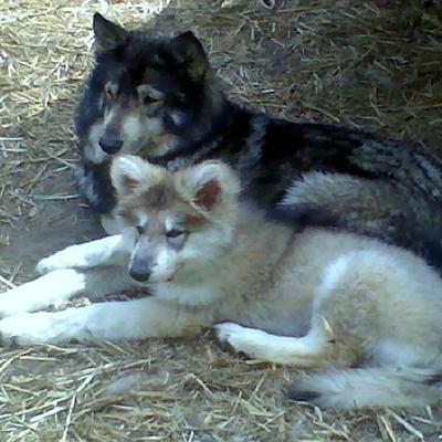 Our beloved Pawnee & Apache