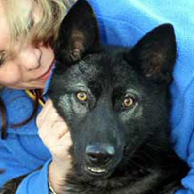 Howling Woods Farm Adopted Canine Inari